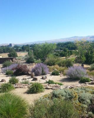 Xeriscaped Back Yard