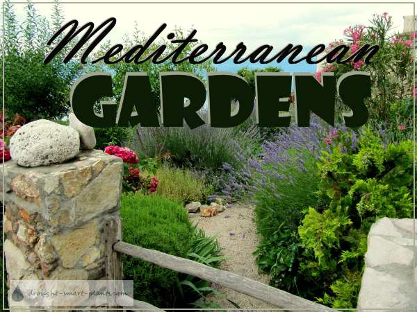 Mediterranean Gardens...drought Tolerant, And Gorgeous