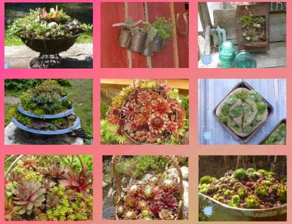 Metal Planters collage
