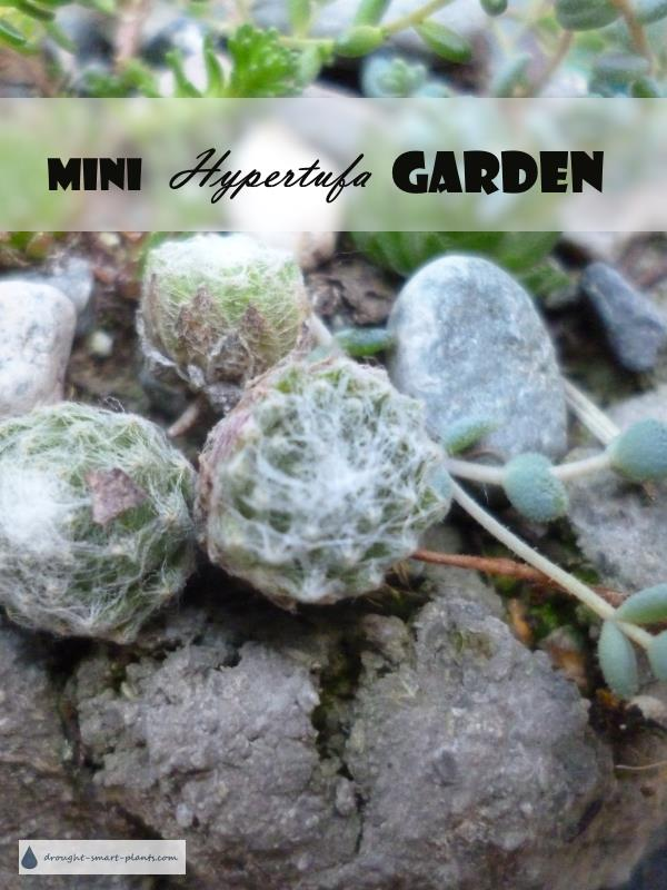 Mini Hypertufa Garden for the fairies