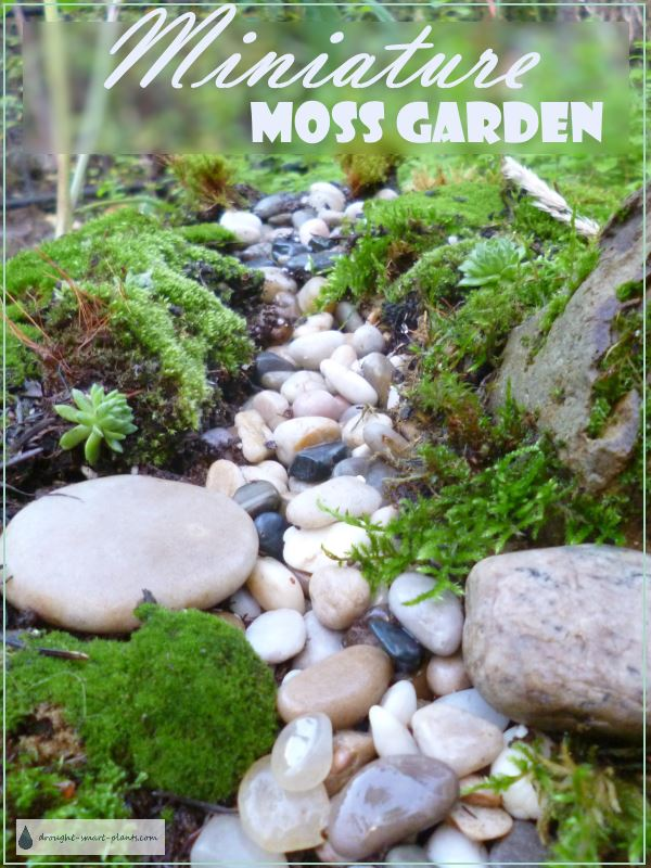 Miniature moss garden - a tiny streambed less than a foot square...
