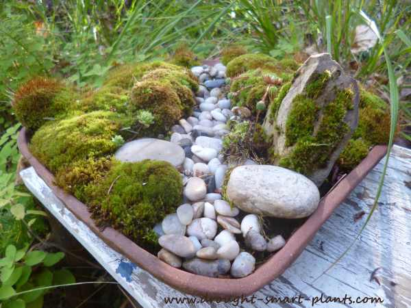 A tiny dry streambed, less than a foot square...