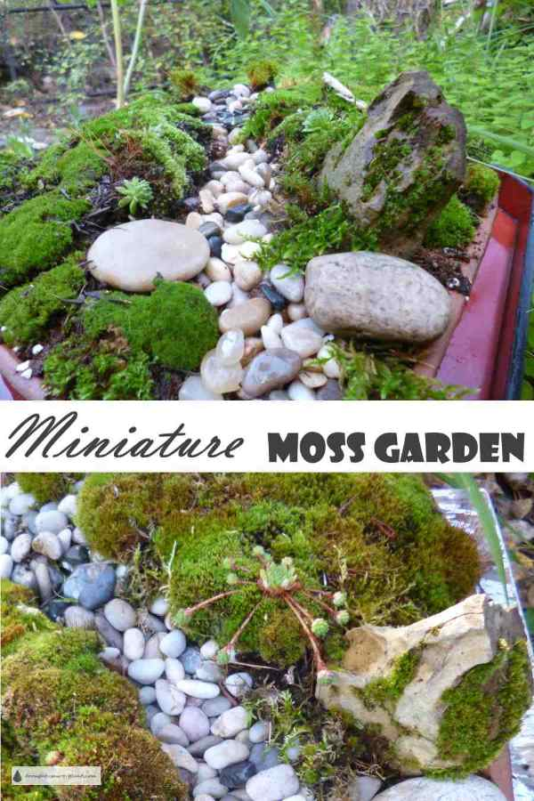 Miniature Moss Garden   A Tiny Streambed Less Than A Foot Square.