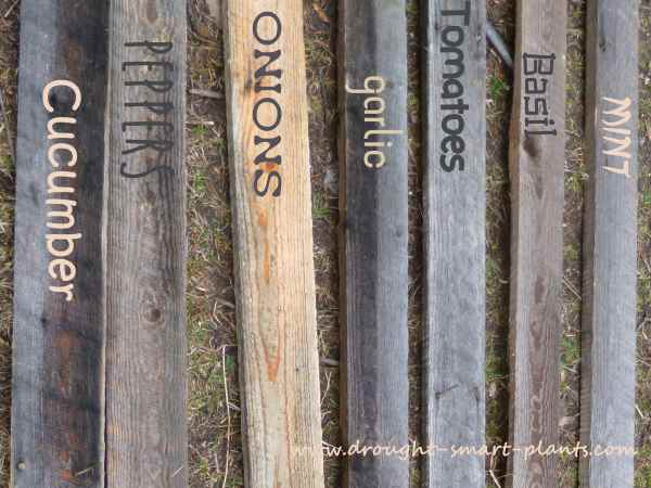 Mock up of wooden boards or slats as plant labels