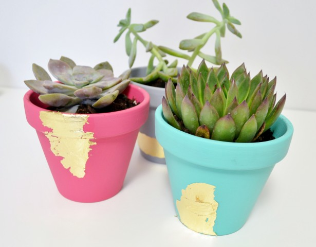 ...and a completely different look for terracotta pots...