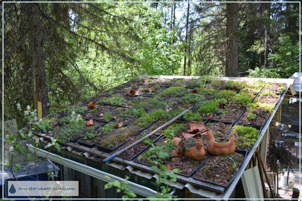 Here's what the Modular Green Roof looks like in May 2016