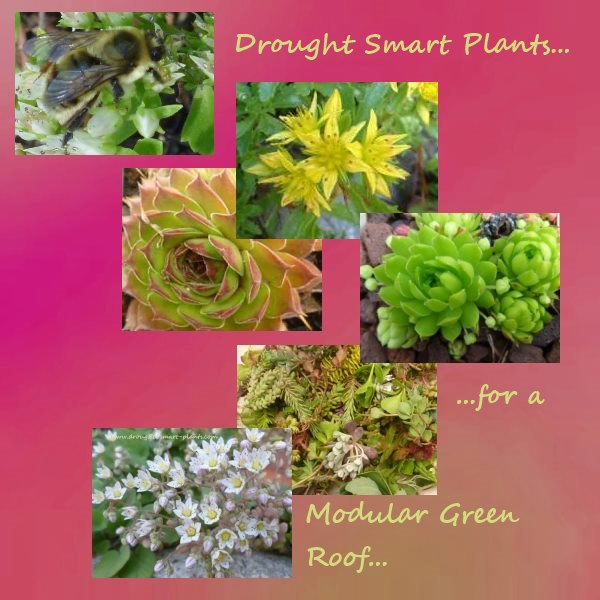 Choosing the right plants is easy - they need to be drought tolerant and low growing...