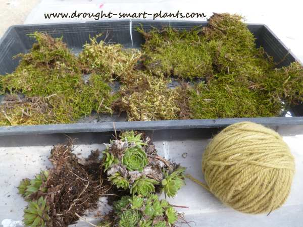 A few simple supplies are all you need to make Moss Balls...