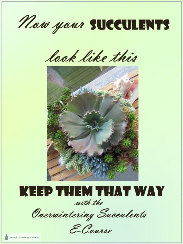 Now your succulents look like this, keep them that way!