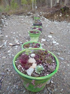 Camouflage Pots on parade