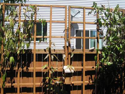 1) Overview of trellis