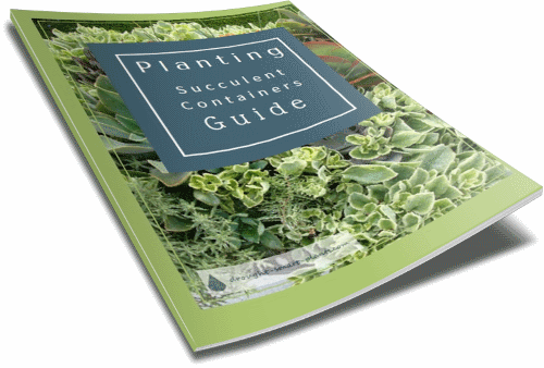 Get more tips on Planting Containers with the free guide