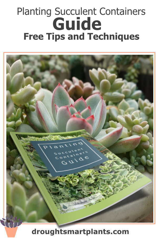 Planting Succulent Containers Guide