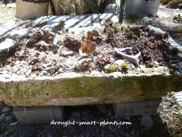 I took this hypertufa planter from this...