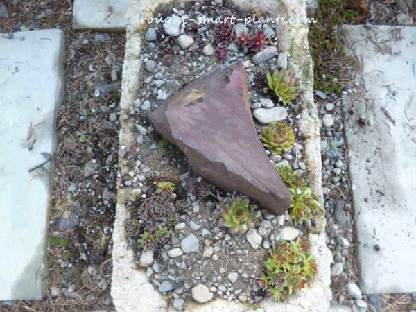The top view of the large red stone in the hypertufa trough