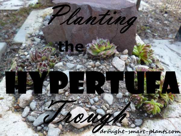 Special Gardening Event - Planting the Hypertufa Trough