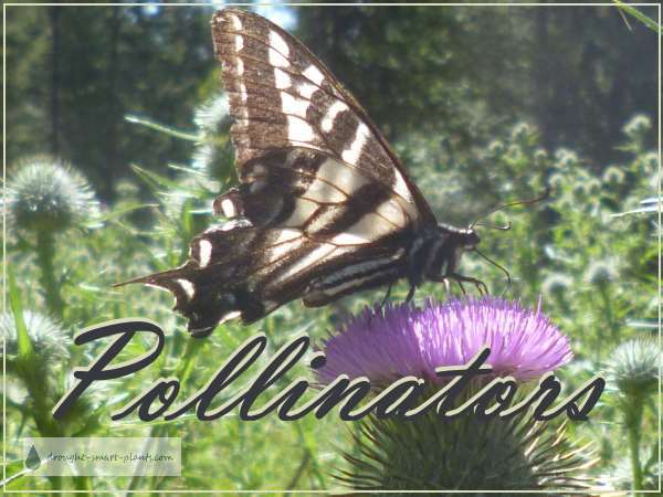 Don't be too quick to pull all the weeds...the pollinators need them