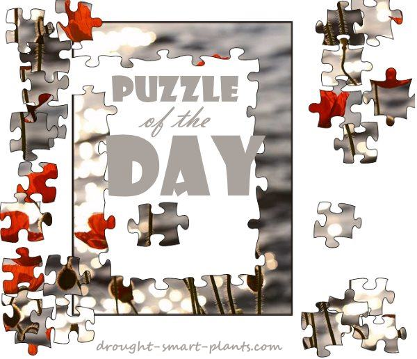 Puzzle of the Day - great online jigsaw puzzles...