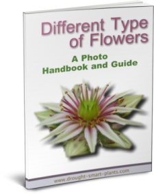 Different Type of Flowers - see more (it's free with the purchase of the Succulent Plant Propagation E-Book!)