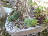 Hypertufa Alpine Trough