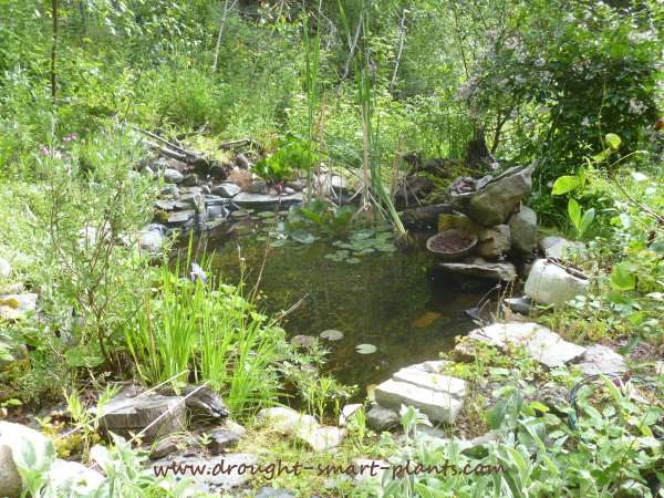 Ecosystem ponds add more than just wildlife habitat...
