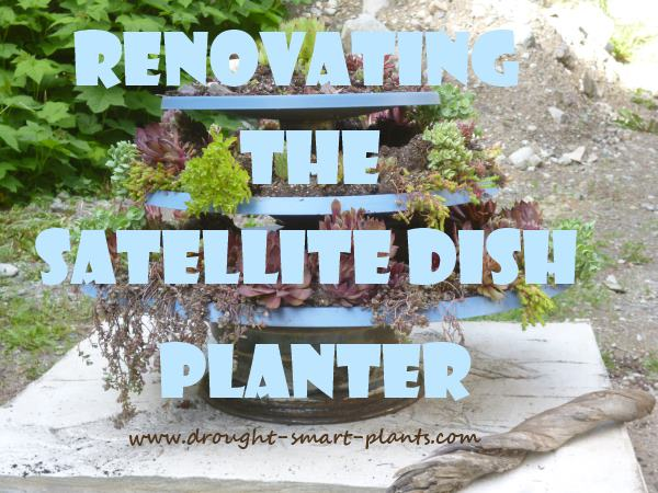 Renovating the Satellite Dish Planter...