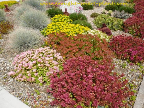 Xeriscaping with hardy succulents...