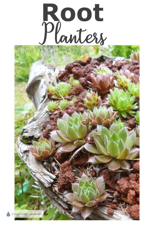 Root Planters from Mother Natures Design Studio