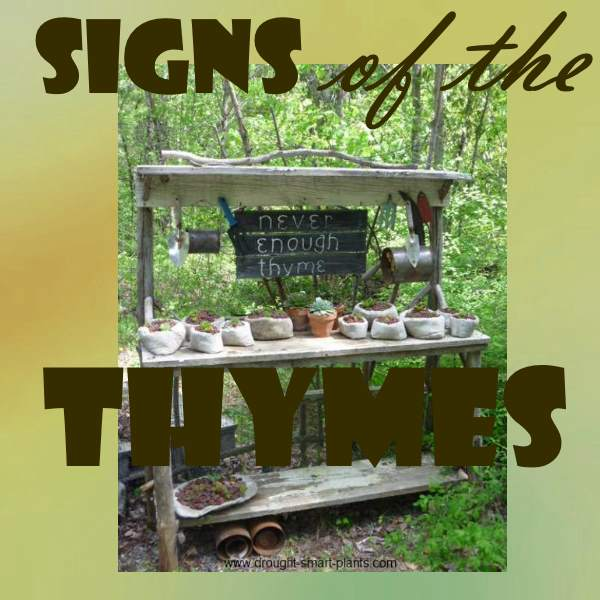 Signs of the Thymes; funny garden sign sayings all about thyme to paint on rustic garden signs; enjoy!