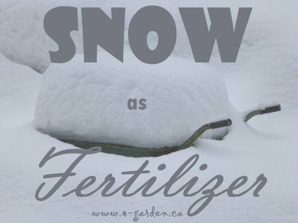 Snow as Fertilizer?