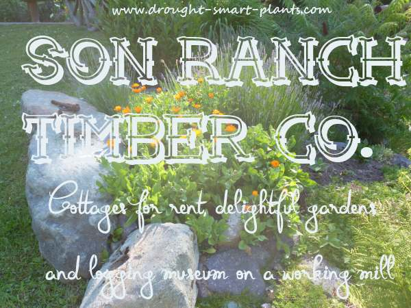 The Garden at Son Ranch Timber Co.