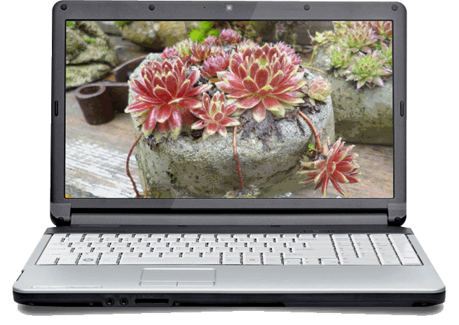 The Succulent Plant Business E-Course - it's all online!