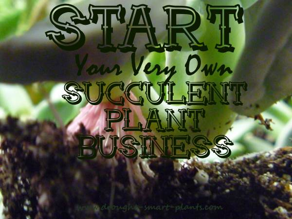 Start your very own Succulent Plant Business