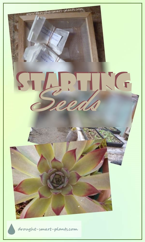 Starting Seeds - more hardy succulent propagation