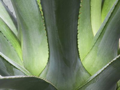 Example of a healthy succulent