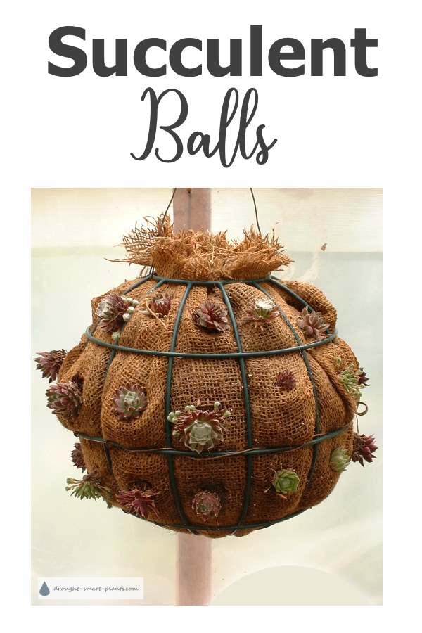 Make your own Succulent Ball