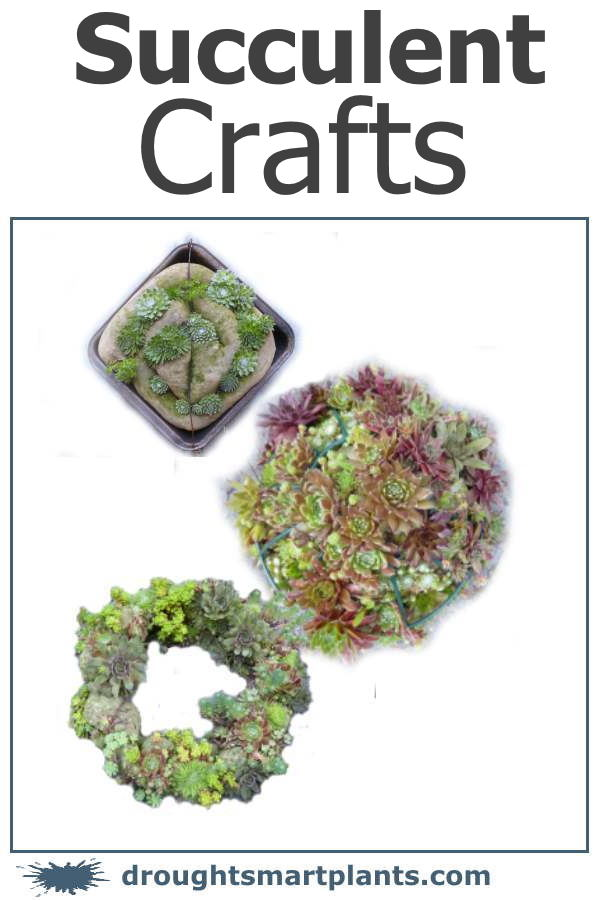 Succulent Crafts - textural, intricate, lovely