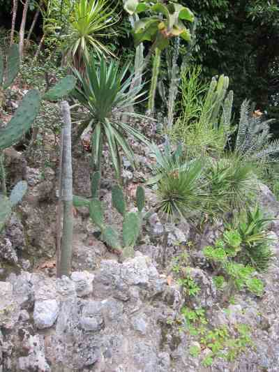 Succulent Gardens Planting Growing Enjoying Your Xeriscape