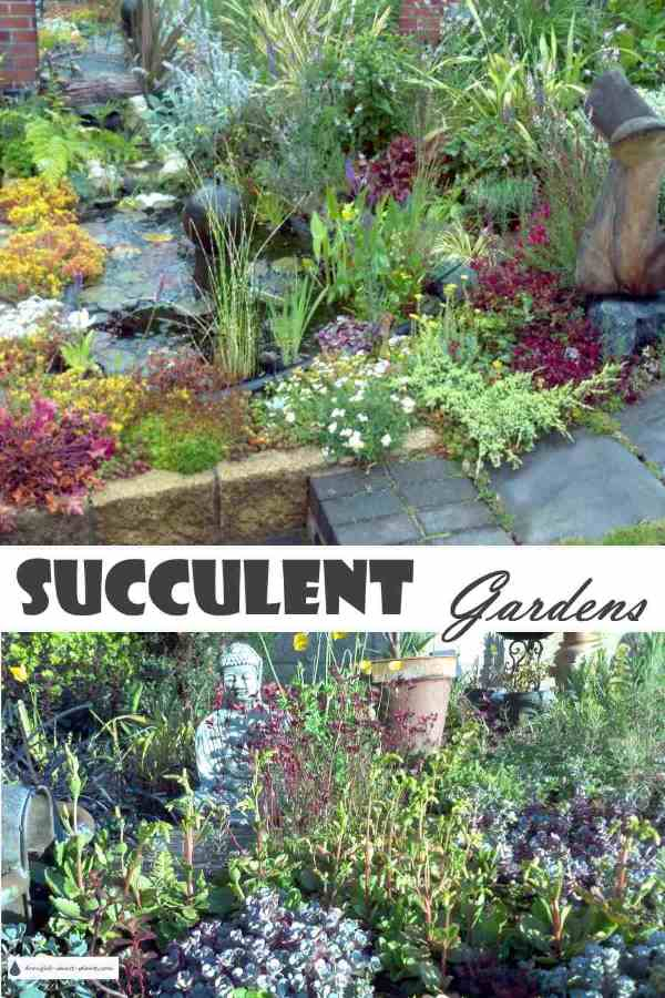 Hot, Dry, Challenging Conditions? No Problem... Succulent Gardens ...
