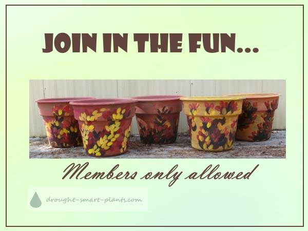 Join in the fun and sign up for the exclusive members only e-course