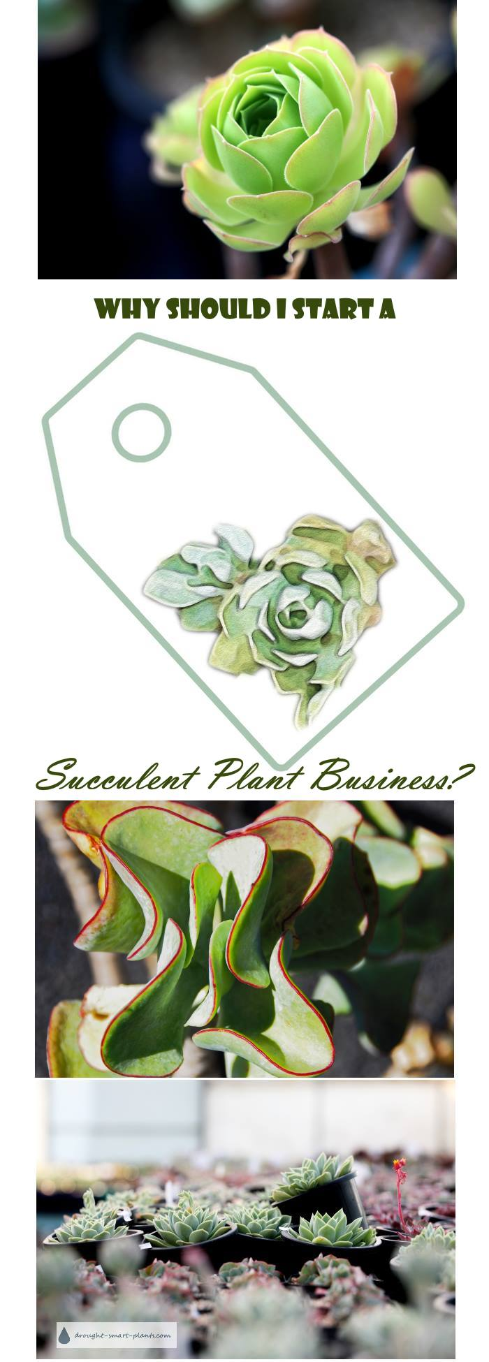 Why Should I Start a Succulent Plant Business? What are the benefits?
