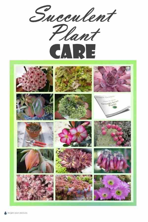 Caring for Succulents; How to Grow the best, biggest, healthiest Succulent Plants...