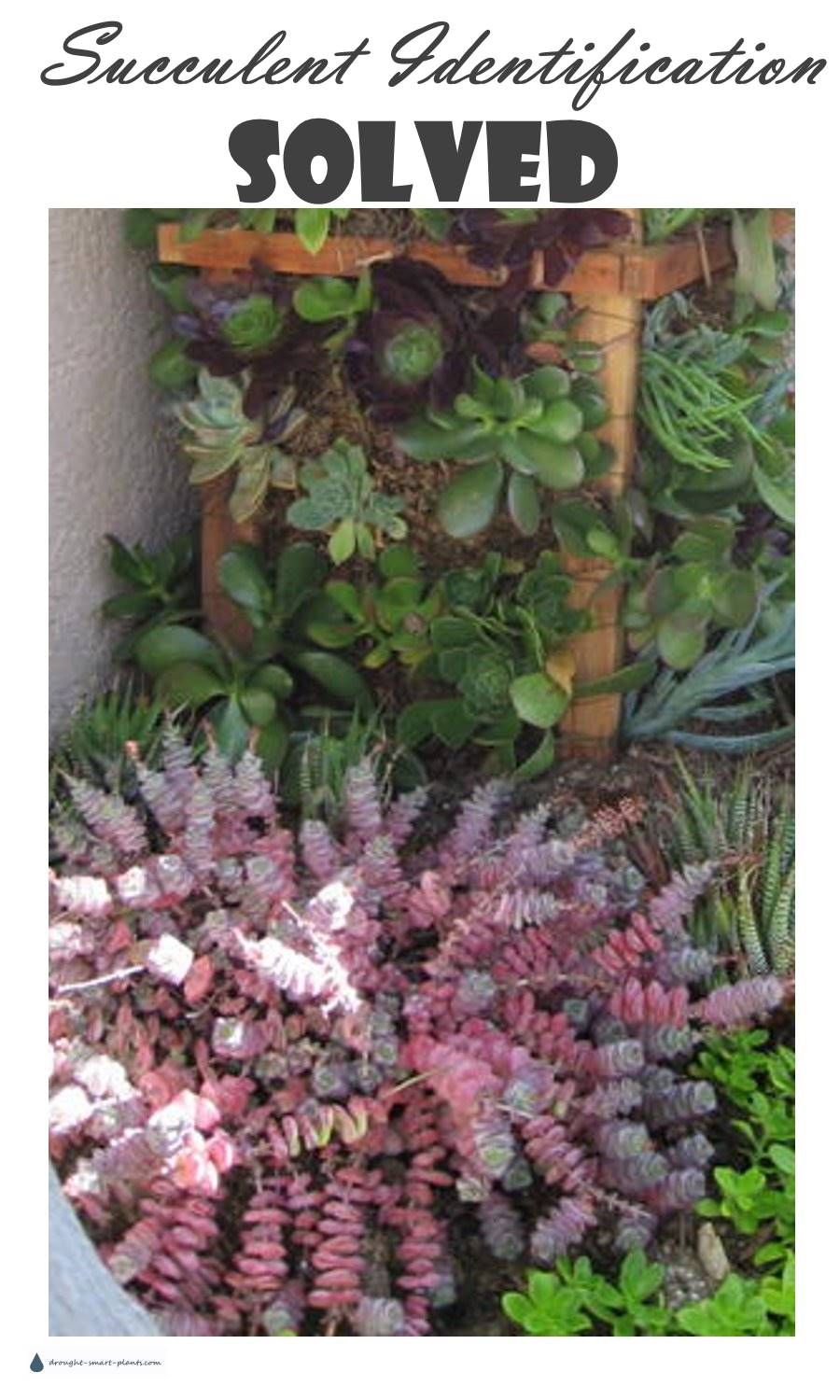 Succulent Identification Solved!  Still wondering what your plant is? See more here...