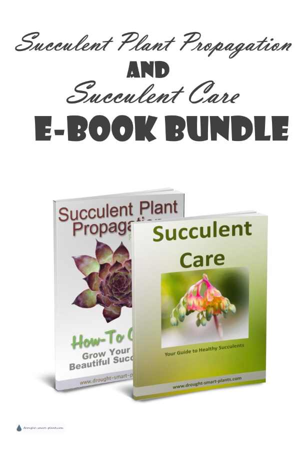 Succulent Plant Propagation and Succulent Care E-Book Bundle