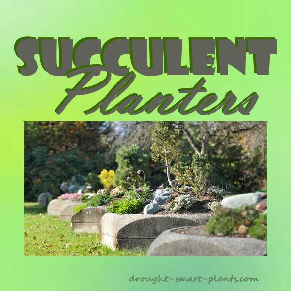 Succulent Planter with mix and match succulent plants