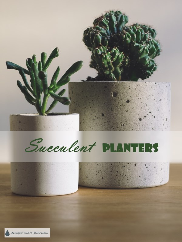 Succulent Planters - pottery, ceramic and glass
