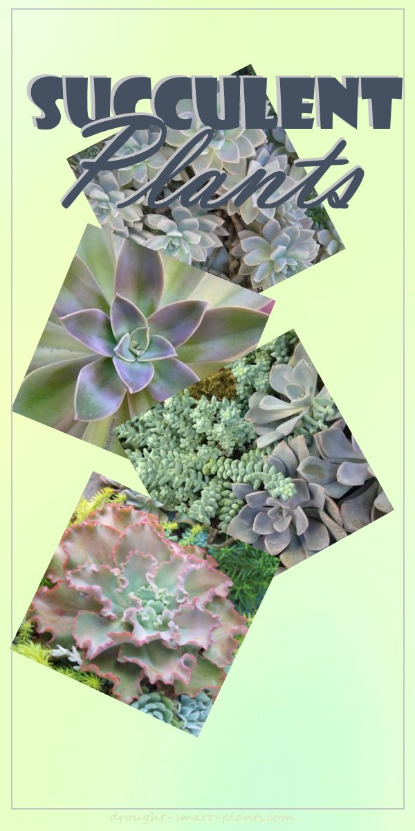 Beautiful lush tender succulent plants...