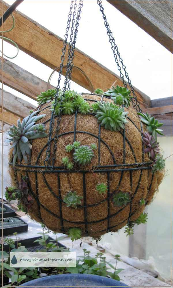 Succulent Sphere Wire Garden Spheres Filled With Succulents