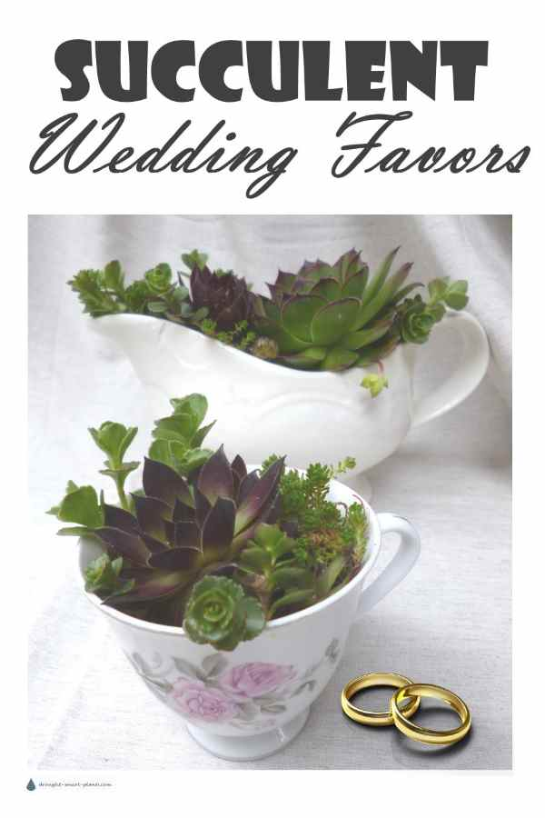 Succulent Wedding Favors - little mementos for your wedding guests