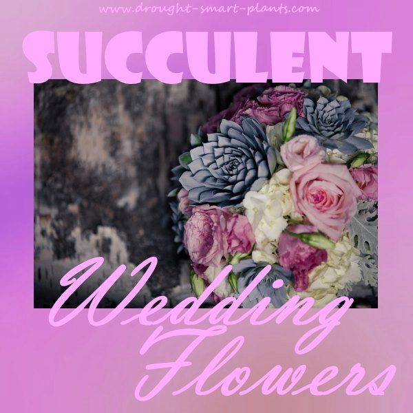Succulent Wedding Flowers...